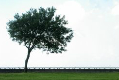 leaning tree 02