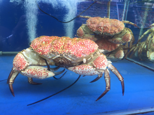 kh singapore crabs